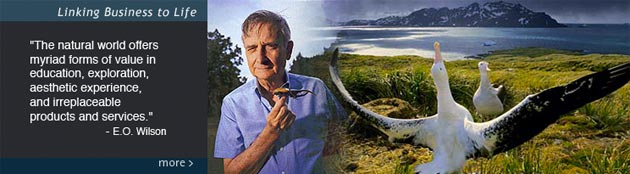 EO Wilson: Encyclopedia of Life